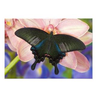 Sammamish, Washington Tropical Butterfly 23 Photo Print