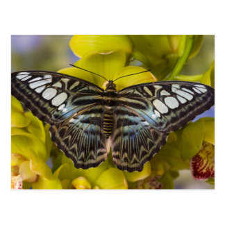 Sammamish, Washington Tropical Butterfly 23 Postcard