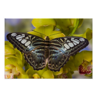 Sammamish, Washington Tropical Butterfly 23 Poster