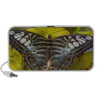 Sammamish, Washington Tropical Butterfly 23 iPhone Speakers