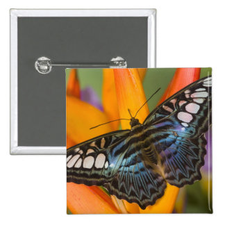 Sammamish, Washington Tropical Butterfly 24 15 Cm Square Badge