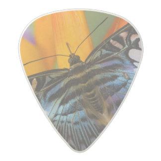 Sammamish, Washington Tropical Butterfly 24 Acetal Guitar Pick