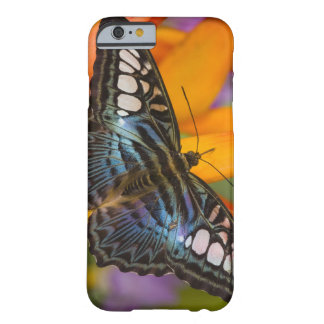 Sammamish, Washington Tropical Butterfly 24 Barely There iPhone 6 Case