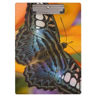 Sammamish, Washington Tropical Butterfly 24 Clipboard