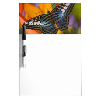 Sammamish, Washington Tropical Butterfly 24 Dry Erase Board