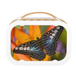 Sammamish, Washington Tropical Butterfly 24 Lunch Box