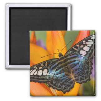 Sammamish, Washington Tropical Butterfly 24 Magnet