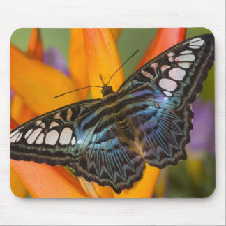 Sammamish, Washington Tropical Butterfly 24 Mouse Mat