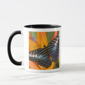 Sammamish, Washington Tropical Butterfly 24 Mug