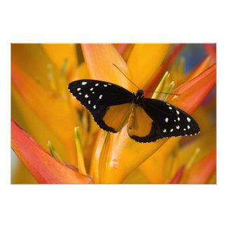 Sammamish, Washington Tropical Butterfly 24 Photo Print