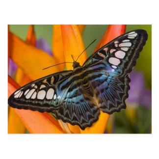 Sammamish, Washington Tropical Butterfly 24 Postcard