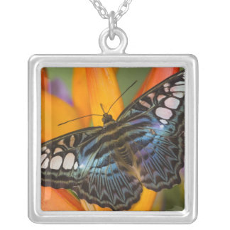 Sammamish, Washington Tropical Butterfly 24 Silver Plated Necklace