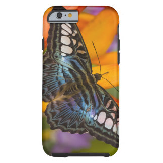 Sammamish, Washington Tropical Butterfly 24 Tough iPhone 6 Case