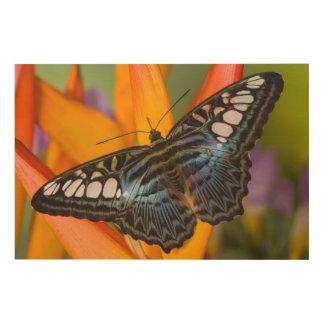 Sammamish, Washington Tropical Butterfly 24 Wood Wall Art