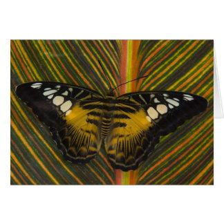 Sammamish, Washington Tropical Butterfly 25 Card