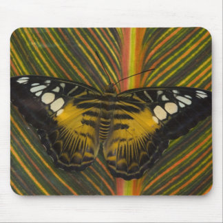 Sammamish, Washington Tropical Butterfly 25 Mouse Mat