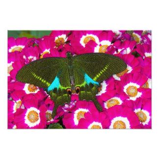 Sammamish, Washington Tropical Butterfly 25 Photo Print