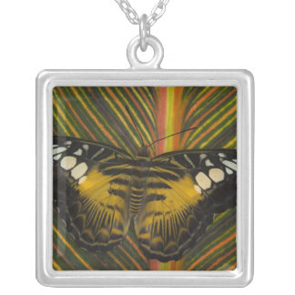 Sammamish, Washington Tropical Butterfly 25 Silver Plated Necklace