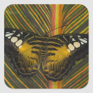 Sammamish, Washington Tropical Butterfly 25 Square Sticker