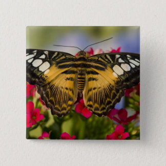 Sammamish, Washington Tropical Butterfly 26 15 Cm Square Badge