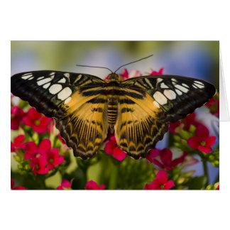 Sammamish, Washington Tropical Butterfly 26 Card