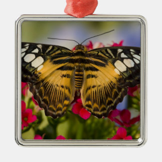 Sammamish, Washington Tropical Butterfly 26 Christmas Ornament