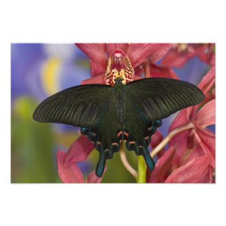 Sammamish, Washington Tropical Butterfly 26 Photo Print