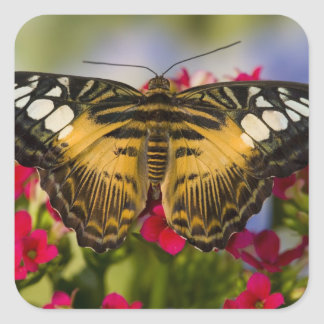 Sammamish, Washington Tropical Butterfly 26 Square Sticker