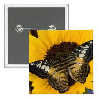 Sammamish, Washington Tropical Butterfly 27 Pins