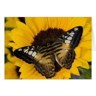 Sammamish, Washington Tropical Butterfly 27 Card