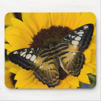 Sammamish, Washington Tropical Butterfly 27 Mouse Mat