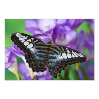 Sammamish, Washington Tropical Butterfly 27 Photo Print
