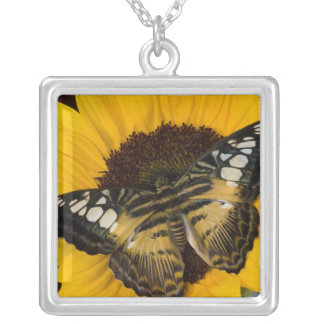 Sammamish, Washington Tropical Butterfly 27 Square Pendant Necklace