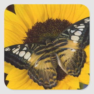 Sammamish, Washington Tropical Butterfly 27 Square Sticker