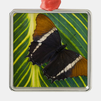 Sammamish, Washington Tropical Butterfly 28 Christmas Ornament