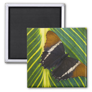Sammamish, Washington Tropical Butterfly 28 Magnet