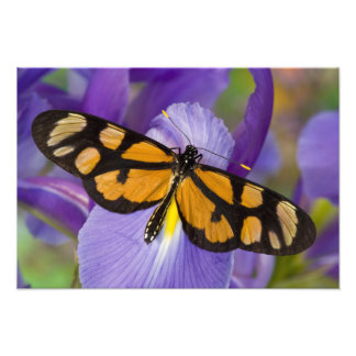 Sammamish, Washington Tropical Butterfly 28 Photo Print
