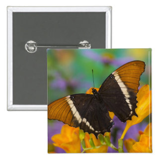 Sammamish, Washington Tropical Butterfly 29 15 Cm Square Badge