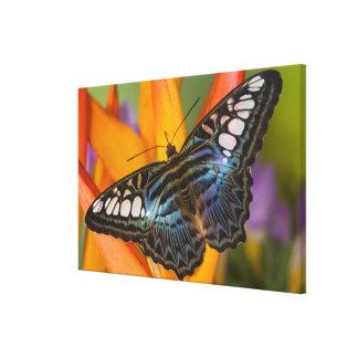 Sammamish, Washington Tropical Butterfly 29 Canvas Print