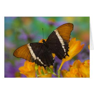 Sammamish, Washington Tropical Butterfly 29 Card