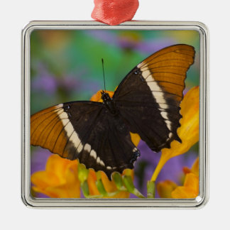 Sammamish, Washington Tropical Butterfly 29 Christmas Ornament
