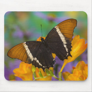 Sammamish, Washington Tropical Butterfly 29 Mouse Mat