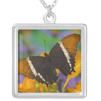 Sammamish, Washington Tropical Butterfly 29 Square Pendant Necklace