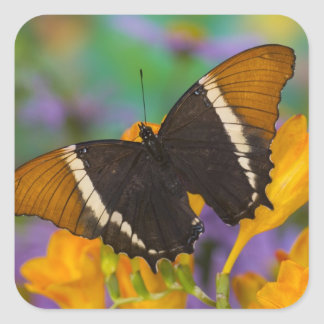 Sammamish, Washington Tropical Butterfly 29 Square Sticker
