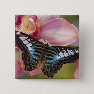 Sammamish, Washington Tropical Butterfly 2 15 Cm Square Badge