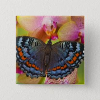 Sammamish Washington Tropical Butterfly 2 15 Cm Square Badge
