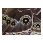 Sammamish Washington Tropical Butterfly 2 Art Photo