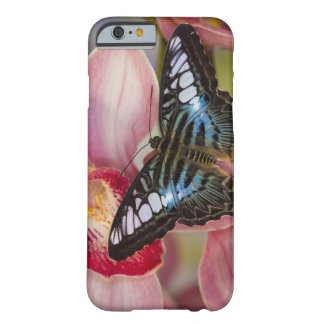 Sammamish, Washington Tropical Butterfly 2 Barely There iPhone 6 Case