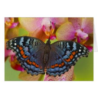 Sammamish Washington Tropical Butterfly 2 Card
