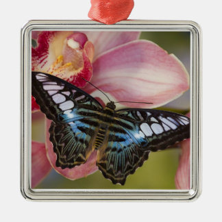 Sammamish, Washington Tropical Butterfly 2 Christmas Ornament